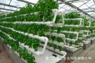 福建水培栽培技术