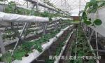 无土栽培基质槽