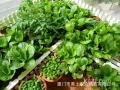 阳台种花种菜营养土